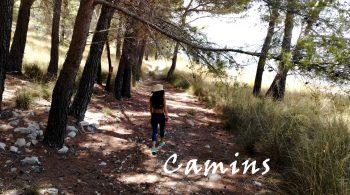 Camins
